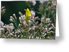 Gold Finches-12 Greeting Card