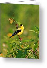 Gold Finches-2 Greeting Card