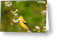 Gold Finches-3 Greeting Card