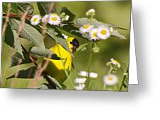 Gold Finches-7 Greeting Card
