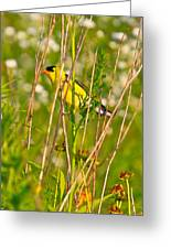 Gold Finches-8 Greeting Card