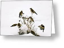 Gold Finches In Snow Greeting Card