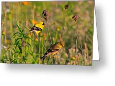 Gold Finches Greeting Card