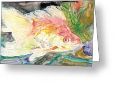 Gold Fish With Purple Greeting Card