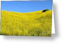 Gold Hills Greeting Card