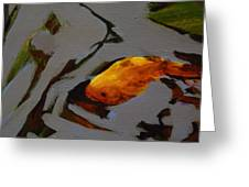Gold In The Pond Greeting Card
