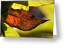 Gold Leaf In Fall Greeting Card