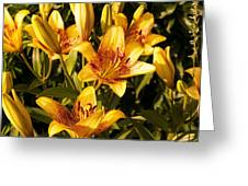Gold Lilly Greeting Card