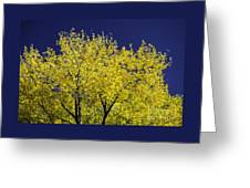 Gold On Blue Greeting Card