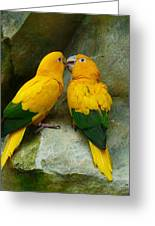 Gold Parakeets Greeting Card