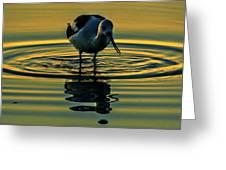 Gold Pond Avocet Greeting Card