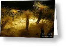 Gold Sea Anemones Greeting Card