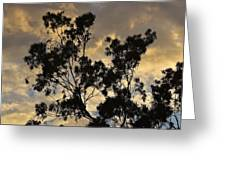 Gold Sunset Tree Silhouette I Greeting Card