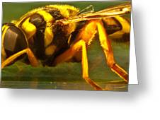 Gold Syrphid Fly Greeting Card