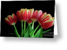 Gold Tip Tulips Greeting Card by Tracy Hall