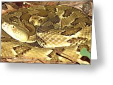 Gold Viper Greeting Card