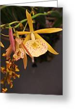 Gold Yellow Orchid  Greeting Card