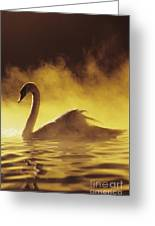 Golden African Swan Greeting Card