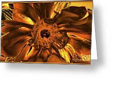 Golden Anemone Greeting Card