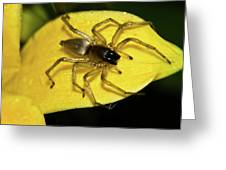 Golden Arachnid  Greeting Card