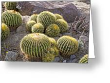Golden Barrel Cactus Greeting Card