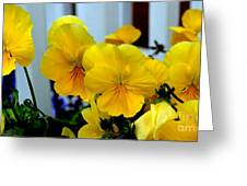 Golden Blooms Beside The Porch Greeting Card