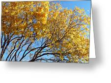 Golden Boughs Greeting Card