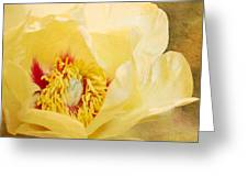 Golden Bowl Tree Peony Bloom Greeting Card