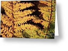Golden Bracken Greeting Card