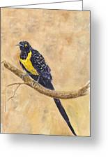 Golden Breasted Starling Greeting Card