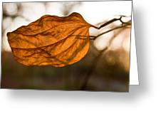 Golden Briar Leaf Greeting Card