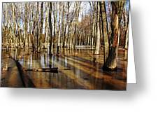 Golden Brown Pond Greeting Card