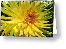 Golden Dahlia Beauty Greeting Card