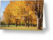 Golden Colors In Autumn Bellavista Park Oregon. Greeting Card
