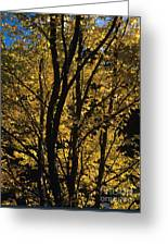 Golden Colors Of Autumn In New England  Greeting Card