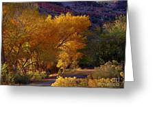 Golden Cottonwoods Greeting Card