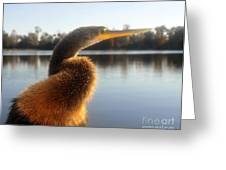 Golden Crested Anhinga Greeting Card