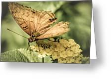 Golden Cruiser Greeting Card