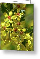 Golden Currant Blossoms Greeting Card