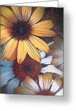 Golden Daisies Greeting Card
