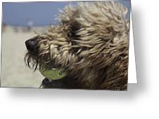 Golden Doodle And His Ball Greeting Card