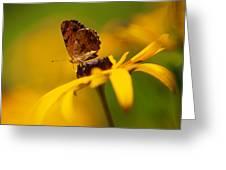 Golden Dreams Of A Summer Garden Greeting Card
