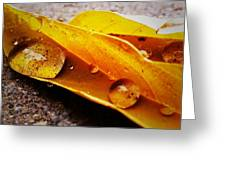 Golden Droplets Greeting Card