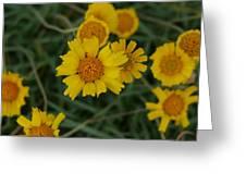 Golden Dyssodia Greeting Card