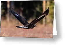 Golden Eagle Flying Greeting Card