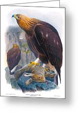 Golden Eagle Antique Print John Gould Birds Of Great Britain Greeting Card