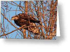 Golden Eagle Liftoff Greeting Card