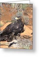 Golden Eagle On Rabbit Greeting Card