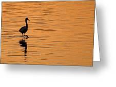 Golden Egret Greeting Card