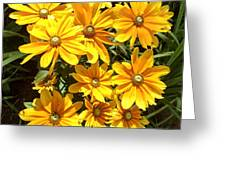 Golden Eyed Susans Greeting Card